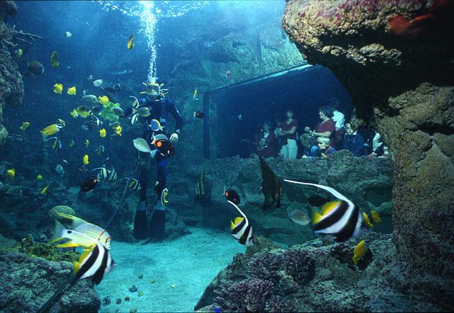 Émerveillement à l'Oceanopolis