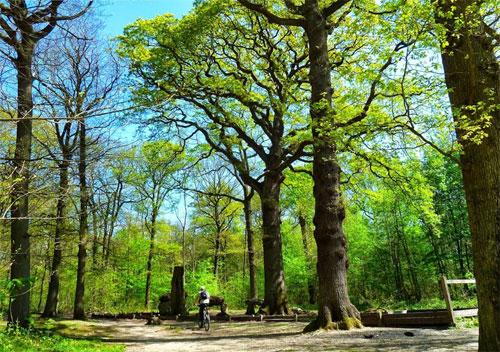 Prenez l'air dans la Forêt de Meudon